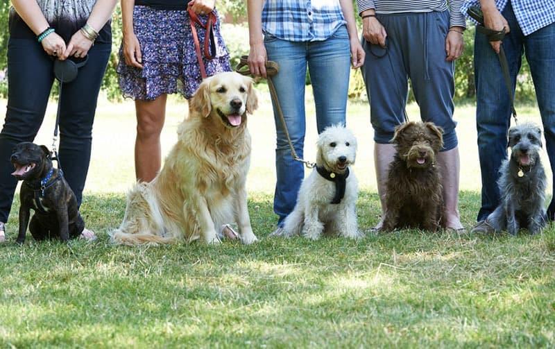 Image of 5 Reasons why you should study dog training