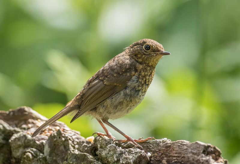 Image of 3 Reasons why you should become an ornithologist