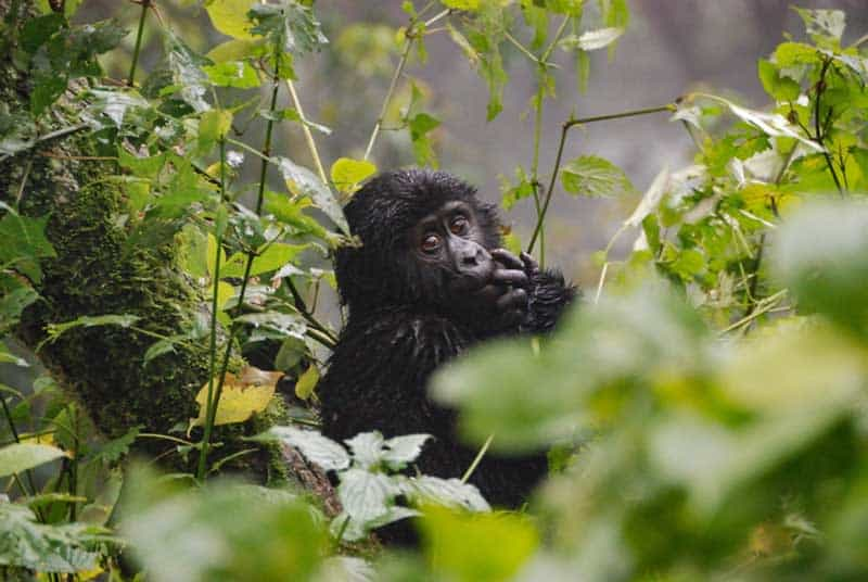 Image of 3 Reasons why you should study Primatology