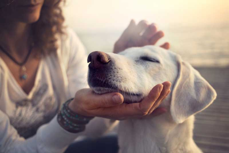 Image of 3 Reasons why you should study Canine Health and Nutrition