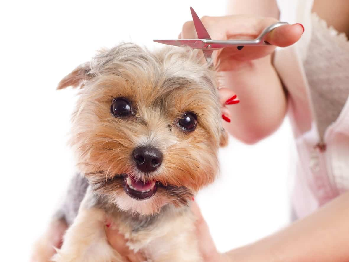 Image of Study a Dog Grooming Course from the Comfort of Your Own Home