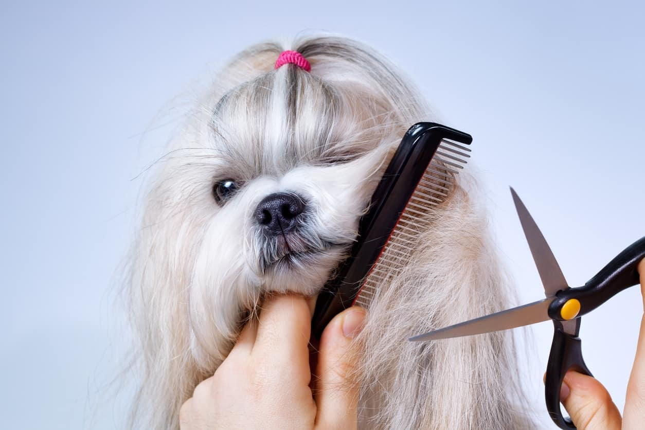 Image of Here's why you should study a Dog Grooming course