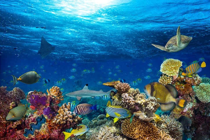 Image of How we can help you become a marine biologist