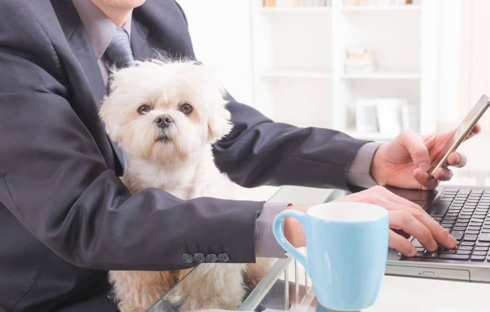 Image of Bring Your Dog to Work Day